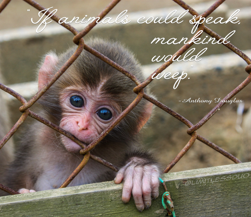 """If animals could speak…"" -Anthony Douglas"